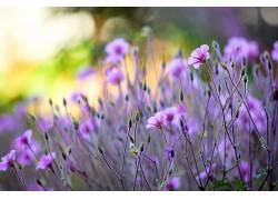 植物,花卉,紫色的花朵,景深381314