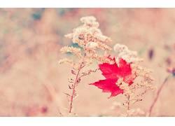 植物,花卉,红355414