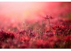 植物,花卉,红色的花朵,背景虚化,景深422654