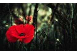 植物,花卉,红色的花朵467739