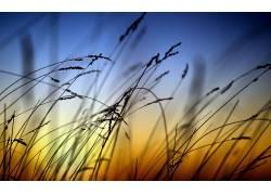 植物,天空,阳光,壁纸22514