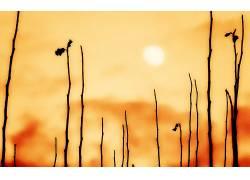 植物,太阳,模糊,阳光60488