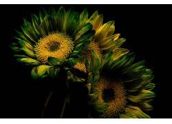 植物,花卉,绿色,黄色的花朵650321