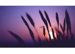 植物,太阳,轮廓292361