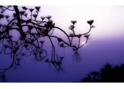 植物,太阳122796