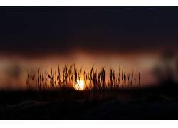 植物,太阳335968