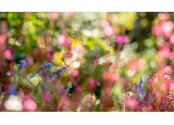 植物,背景虚化,景深,壁纸,宏,花卉,蓝色的花朵338009