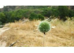 植物,背景虚化400770
