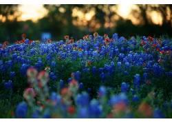 植物,花卉,壁纸,蓝色,红541537