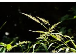 植物,壁纸,阳光,灰尘300775图片