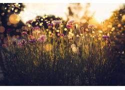 植物,花卉,壁纸,阳光545613图片