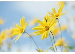 植物,壁纸,黄色的花朵,花卉569257