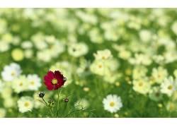 植物,花卉,景深,壁纸338011图片