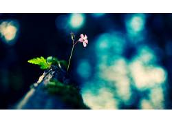 植物,花卉,树叶,宏56242