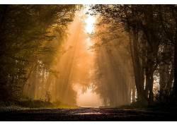 路,森林,植物,太阳光线,薄雾,壁纸,树木457835