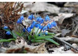植物,花卉,蓝色的花朵,景深354312