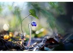 植物,花卉,蓝色的花朵492358