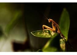 植物,宏,昆虫,螂366667