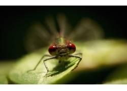 植物,宏,昆虫339366