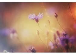 植物,宏,景深,花卉286869
