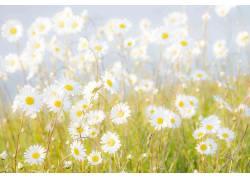 植物,花卉386309