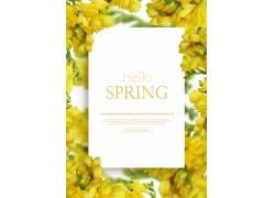 迎春花植物鲜花海报