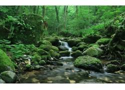 105806,地球,溪流,森林,绿色的,苔藓,岩石,壁纸图片