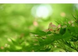 108597,地球,叶子,壁纸图片