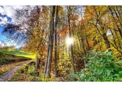 105823,地球,阳光,树,小路,壁纸
