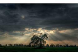 108662,地球,风景优美的,摄影,风景,树,壁纸图片