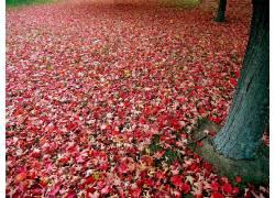 100552,地球,叶子,壁纸图片