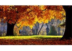 108667,地球,秋天,壁纸