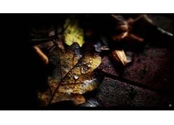 108673,地球,叶子,壁纸图片