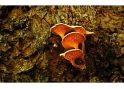 103037,地球,蘑菇,壁纸图片