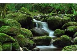 105868,地球,溪流,岩石,苔藓,森林,壁纸图片