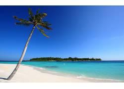 101504,地球,海滩,岛,马尔代夫,蓝色,海洋,天空,手掌,树,热带的,图片
