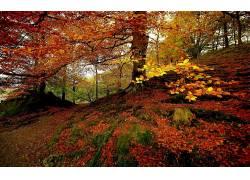 101520,地球,秋天,壁纸图片