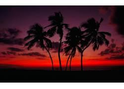 108995,地球,日落,红色,天空,手掌,树,壁纸图片