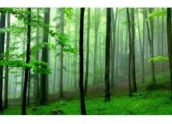 106020,地球,森林,壁纸图片