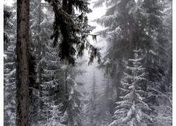 101636,地球,冬天的,壁纸图片