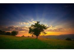 106269,地球,树,树,壁纸