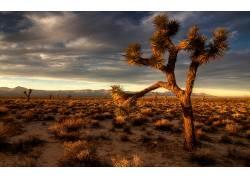 106296,地球,沙漠,壁纸
