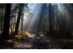 109706,地球,森林,壁纸图片
