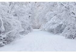 106423,地球,冬天的,雪,小路,路,白色,壁纸图片