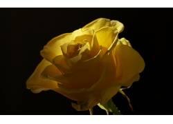 109756,地球,玫瑰,花,花,壁纸