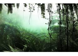 106442,地球,森林,壁纸图片