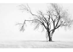 106482,地球,冬天的,领域,树,灰尘,德克萨斯州,壁纸图片
