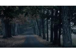 101819,地球,小路,绿树成荫,树,壁纸图片
