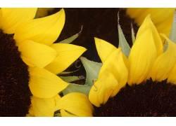 106522,地球,向日葵,花,花,壁纸图片
