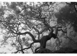 101842,地球,树,树,壁纸图片